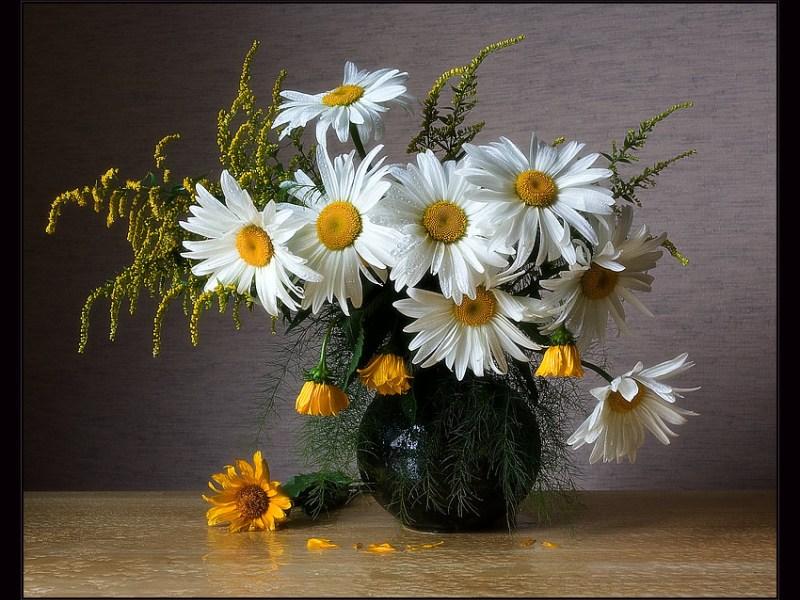 Обои для рабочего стола Цветы № 316