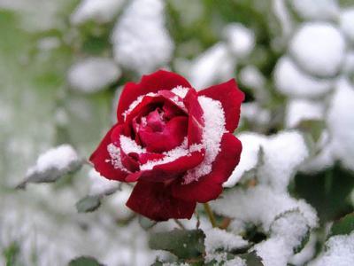 Обои Цветы № 324