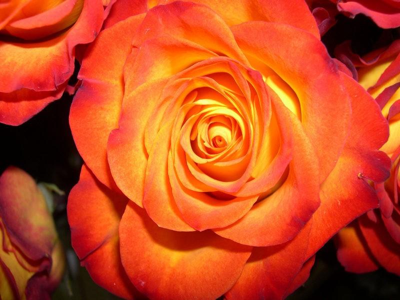 Обои для рабочего стола Цветы № 325