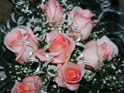 Обои Цветы № 326