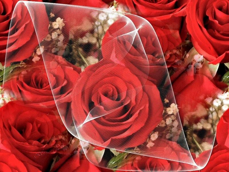 Обои для рабочего стола Цветы № 327