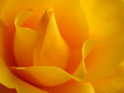Обои Цветы № 330