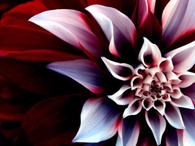 Обои Цветы № 333