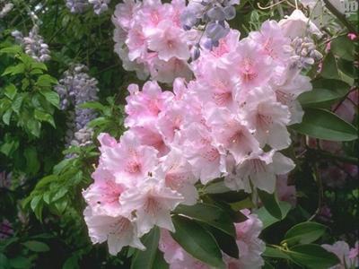 Обои Цветы № 334