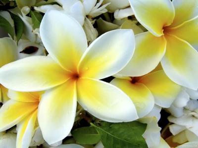 Обои Цветы № 338