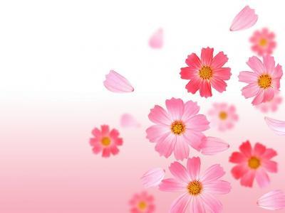 Обои Цветы № 339