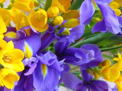 Обои Цветы № 340