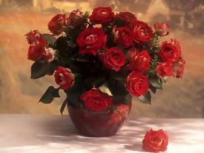 Обои Цветы № 342