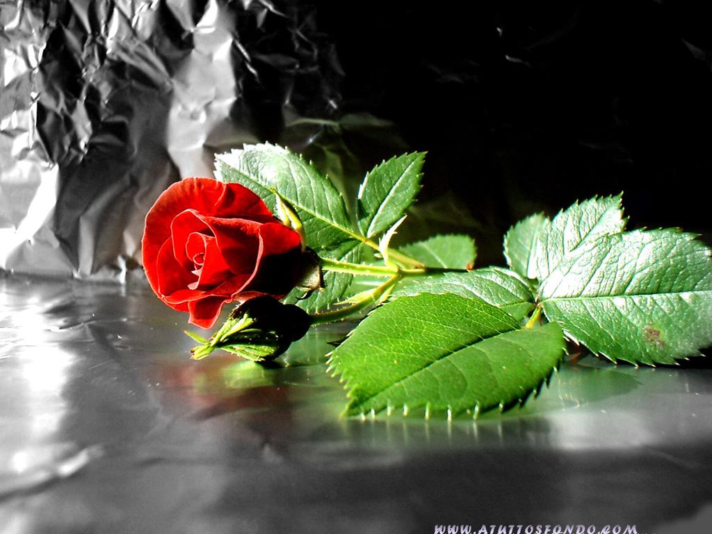 Обои для рабочего стола Цветы № 349