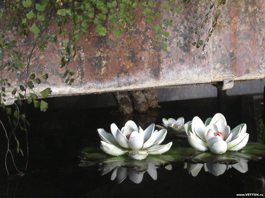 Обои для рабочего стола Цветы № 351