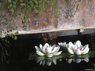 Обои Цветы № 351