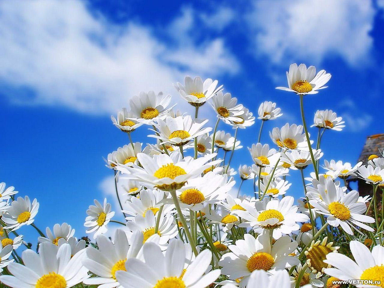 Обои для рабочего стола Цветы № 353