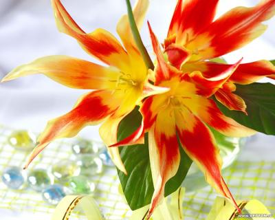 Обои Цветы № 356