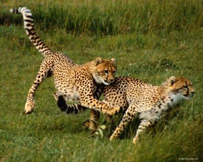 Обои Животные № 189