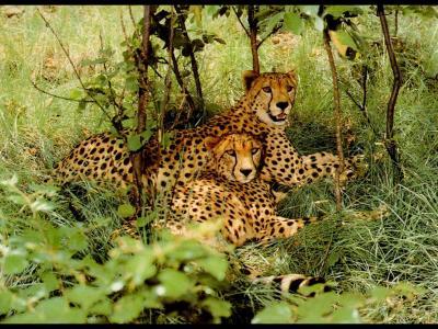 Обои Животные № 206