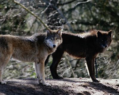 Обои Животные № 232